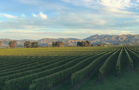 The New Australia: Discovering Cooler Climate Wine Regions